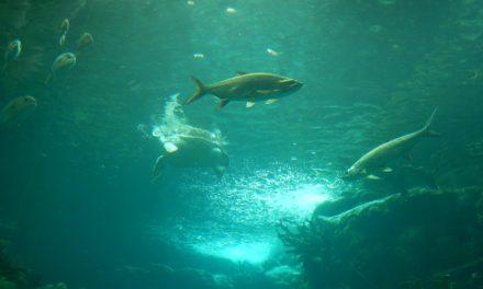 A Day at The Florida Aquarium