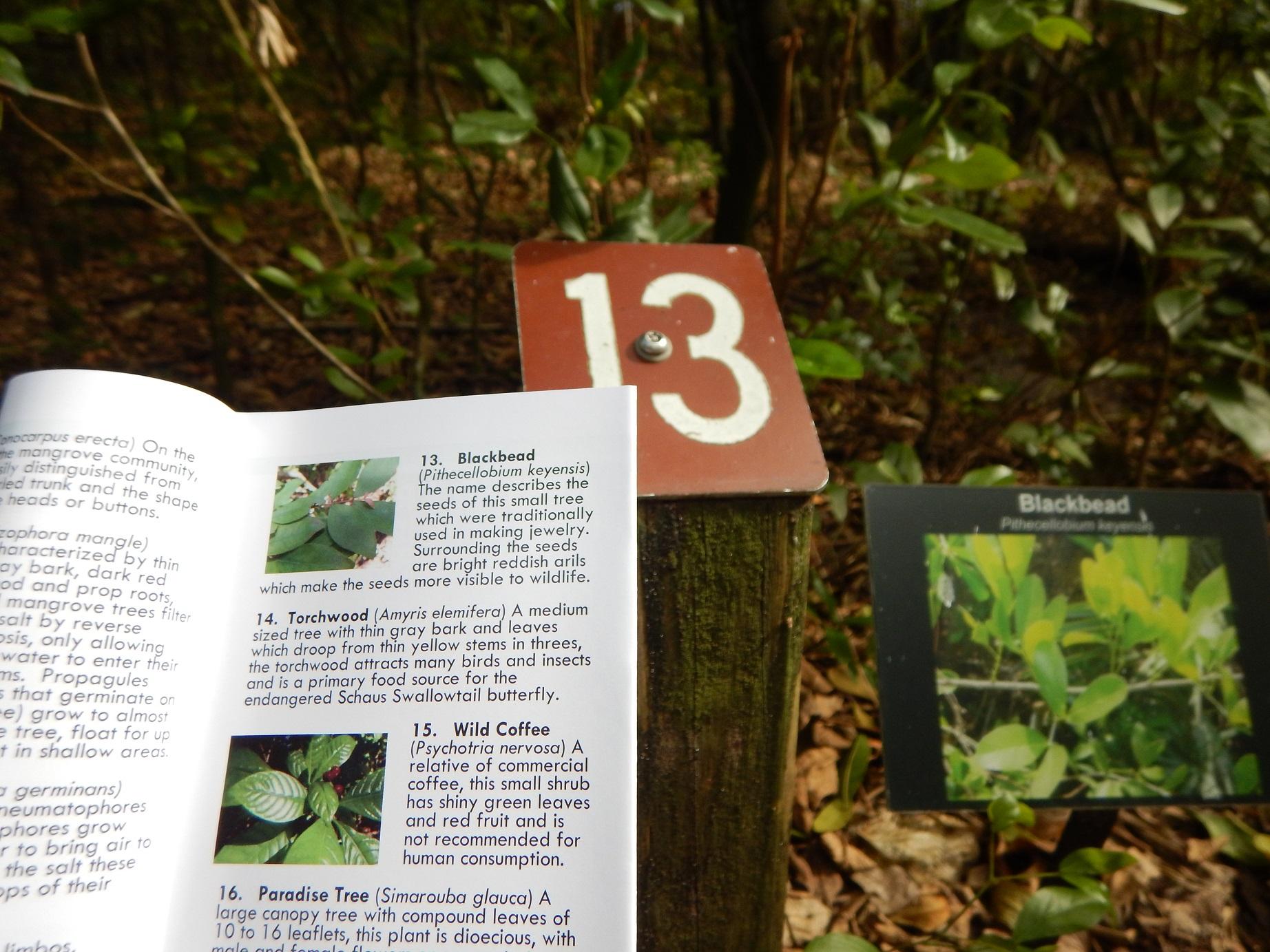 Park Plants Guide at John D Macarthur Beach State Park