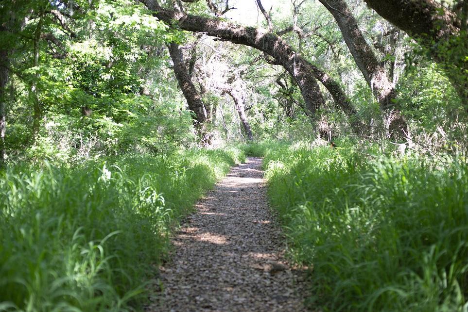 Shady Oak trail at Circle B Bar Reserve