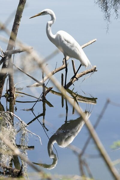 White bird over the lake